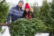 Picking the Christmas tree