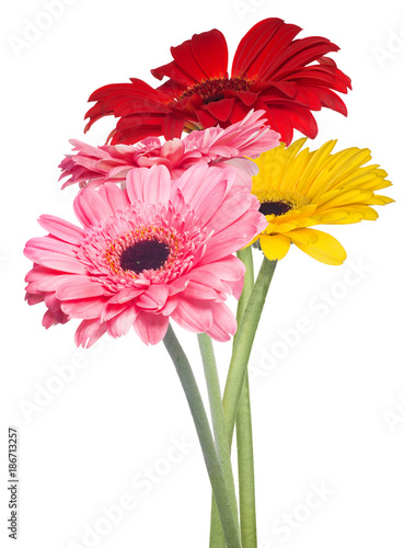four gerbera flowers on white background - 186713257