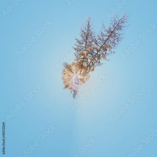 Drzewo. Abstrakcja - 186721264