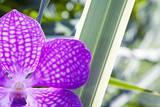 flor orquídea morada