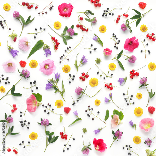 Composition pattern from plants, wild flowers and  berries, isolated on white background, flat lay, top view. The concept of summer, spring, Mother's Day, March 8.  - 186723000