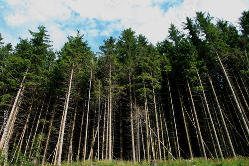 Aluminium Bamboe Black Forest