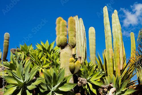 Canvas Canarische Eilanden Cacti Green spring landscape on Canary Islands