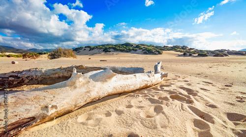 Deurstickers Canarische Eilanden Tree trunks brought from the sea on the beach with sand dunes - Piscinas, Sardinia