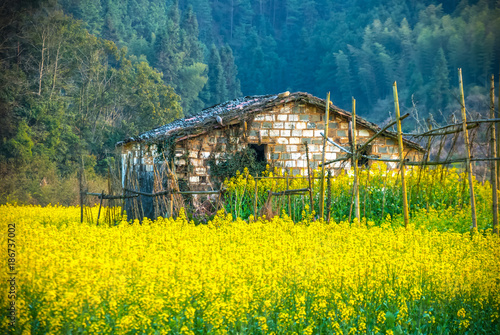 Fotobehang Geel Oilseed rape field in Wuyuan County, Jiangxi province, China. Wuyuan County was founded in the 28th year of Kaiyuan of the Tang Dynasty (740 A. D) for over 1200 years.