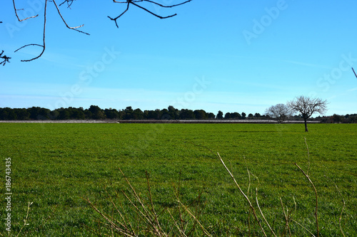 Foto op Plexiglas Blauw Italy, Puglia region, typical countryside landscapes. Cultivated land.