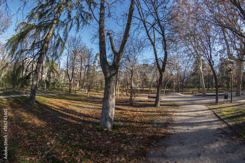 Foto op Canvas Madrid Fisheye 180 view of a space in the Retiro Park in Madrid city