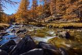La Clarée river with larch trees in full Fall colors. Haute Vallée de la Clarée, Névache, Hautes-Alpes, Alps, France - 186762296