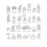 Icon plants in pots - 186769643