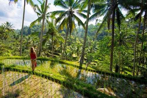 Foto op Canvas Bali Rice terraces in Tagallalang - Bali, Indonesia.