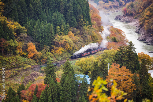 stream train in autumn