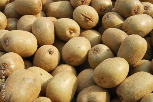 Fresh kiwi fruit in pile in harvest season - 186811601