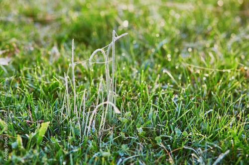 Deurstickers Toscane Water droplets on grass