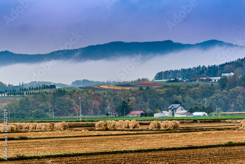 Foto Murales A field with Autumn colors in Furano, Hokkaido, Japan