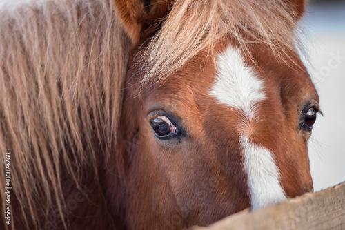 Beautiful horses in winter.