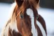 Beautiful horses in winter. - 186824422