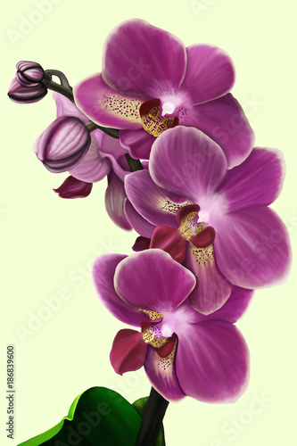 The sprig of a purple orchid phalanopsis on a gentle monophonic background - 186839600