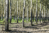 Thorough forestry in France