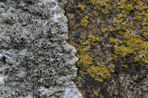 In de dag Stenen Lichen on a gravestone