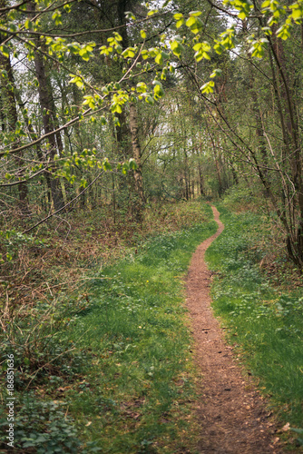 Foto op Aluminium Zalm German woodland