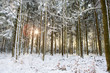 Sunset in winter forest. - 186865803