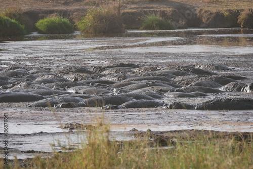 Papiers peints Cappuccino Pod of Hippopotamus bathing in the Serengeti , Tanzania