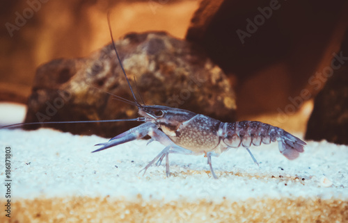 Foto op Canvas Natuur Small crustacean on the bottom of the sea.