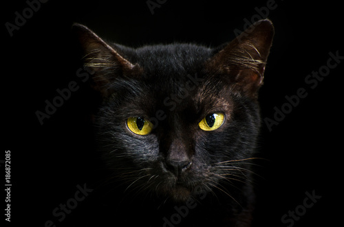 Closeup portrait black cat The face in front of eyes is yellow. Halloween black cat  Black background - 186872085