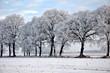 Eine bezaubernde Baumreihe in gefrorener Winterlandschaft
