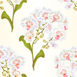Seamless texture branches orchid Phalaenopsis white flowers tropical plants green stem and buds and leaves  vintage vector botanical illustration for design editable hand draw