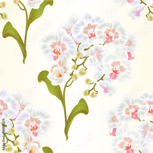 Seamless texture branches orchid Phalaenopsis white flowers tropical plants green stem and buds and leaves  vintage vector botanical illustration for design editable hand draw - 186876279