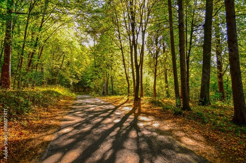 Road in forest droga