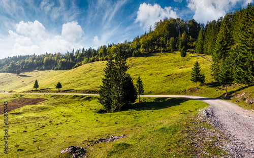 Foto op Canvas Natuur country road through forested hillside. beautiful nature scenery in morning