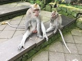 Funny little monkey in the Park in the summer - 186891414