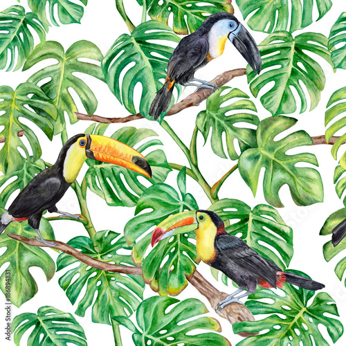 Monstera green. Toucans. Seamless pattern isolated on white background. Illustration. Watercolor. Template. Handmade - 186894831