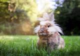 Osterhase auf einer Wiese im Frühling