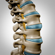 Human Spine Anatomy Section