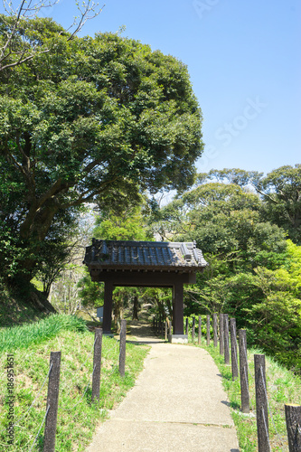 Foto Murales 公園の新緑と青空