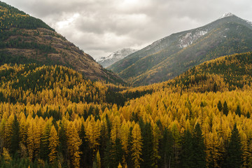 Golden Horseshoe of Larches