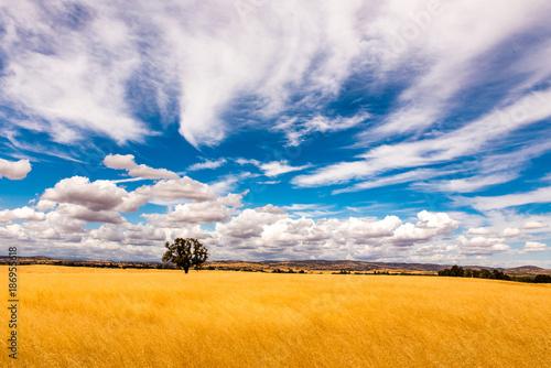 Einsamer Baum auf Gelber weide