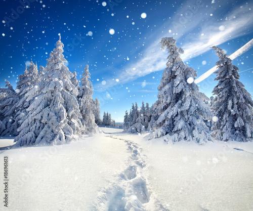 Foto op Plexiglas Weg in bos footprints in the snow