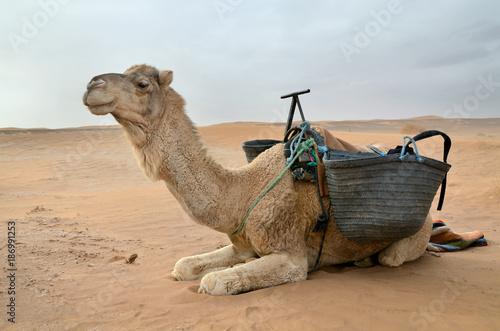 Aluminium Kameel White camel