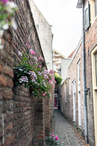 Fotobehang Smalle straatjes Narrow old alley with houses and decorative flowers hanging on brick wall. Deventer, Overijssel, Netherlands.