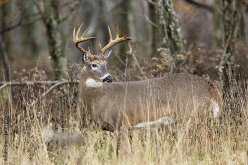 Aluminium Hert White-tail Deer Buck