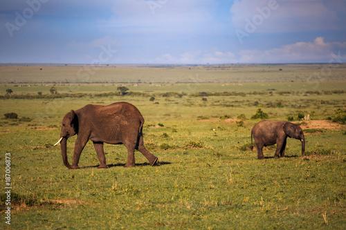 Elephants in the Masai Mara Poster