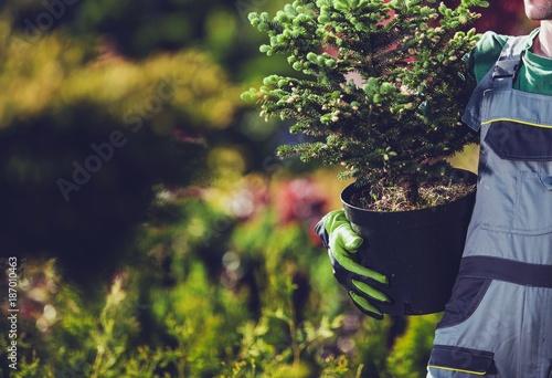 Foto Murales Planting Spruce Trees