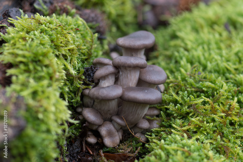 Foto op Canvas Natuur Mushroom and moss in forest