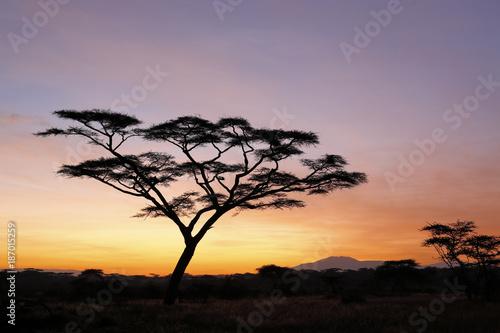 Keuken foto achterwand Ochtendgloren An acacia tree in silhouette at dawn. Tanzania, Africa.