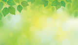 Vector green leaves border on green bokeh background. - 187027466
