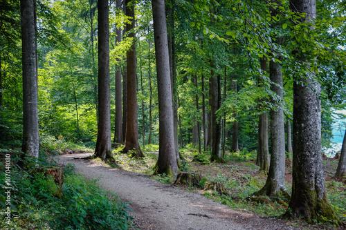 Foto op Plexiglas Weg in bos Austria